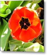 Orange Tulip Metal Print