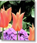 Orange Tulip Painting  Metal Print