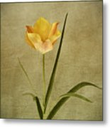 Orange Tulip Metal Print
