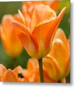 Orange Tulips 2 Metal Print