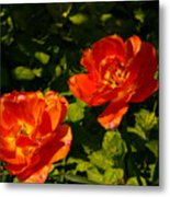 Orange Tulips In My Garden Metal Print