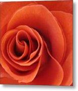 Orange Twist Rose 5 Metal Print