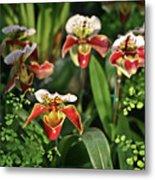 Orange White Orchid Metal Print