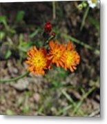 Orange Wild Flowers Metal Print