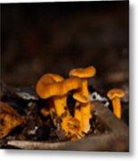 Orange Woodland Mushrooms Metal Print