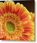 Orange Yellow Gerbera Metal Print