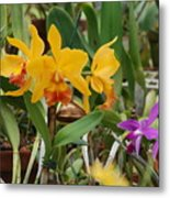 Orangepurple Orchids Metal Print
