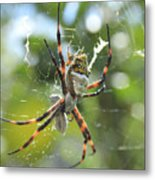 Orb Weaver Spider And Prey In A Web Metal Print