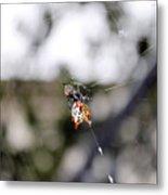 Orb Weaver Spider3 Metal Print