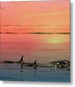 Orca Sunset Metal Print