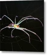Orchard Orbweaver Spider Metal Print