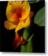 Orchid-0024 Metal Print