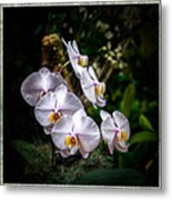 Orchid 1 Triptych Metal Print
