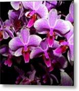 Orchid 12 Metal Print