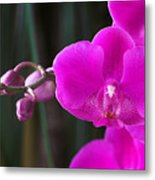 Orchid 18 Metal Print