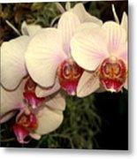 Orchid 19 Metal Print