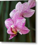 Orchid 20 Metal Print