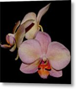 Orchid 2016 1 Metal Print