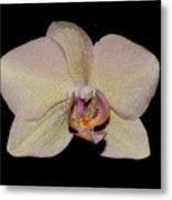 Orchid 2016 2 Metal Print