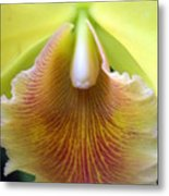 Orchid 21 Metal Print