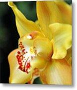 Orchid 24 Metal Print
