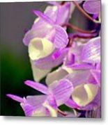 Orchid 25 Metal Print