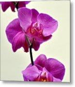 Orchid 26 Metal Print