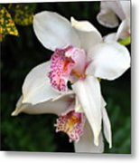 Orchid 29 Metal Print