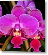 Orchid 422 Metal Print
