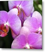 Orchid 5 Metal Print