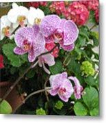 Orchid 6 Metal Print