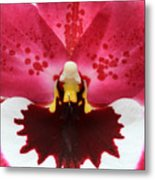 Orchid 7 Metal Print