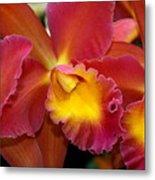 Orchid 8 Metal Print