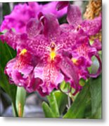 Orchid Aliceara Marfitch Metal Print
