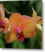 Orchid Aliveness Metal Print
