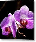 Orchid At Fairchild Gardens Metal Print