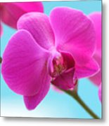 Orchid At The Ocean Closeup Metal Print