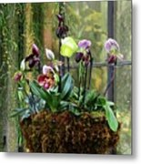 Orchid Basket Metal Print