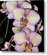 Orchid Blossoms I Metal Print