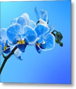 Orchid Blue Metal Print