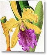 Orchid, Cattleya Dowiana, 1880 Metal Print