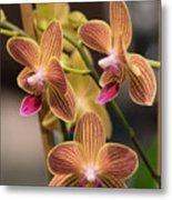 Orchid Chingruey's Goldstaff Metal Print