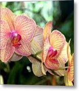Orchid Delight Metal Print