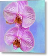 Orchid Delight - Two Blooms Against A Rainbow Background Metal Print