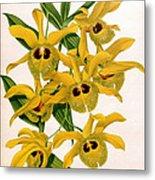Orchid, Dendrobium Chrysotis, 1891 Metal Print