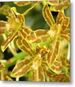 Orchid Drama Canvas Metal Print