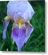 Orchid Dreams Metal Print
