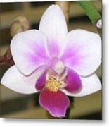 Orchid Explosion Metal Print