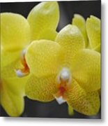 Orchid Family Metal Print