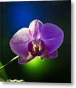 Orchid Flower On Black Background Metal Print